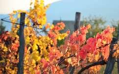 Egri ősz