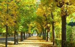 Schönbrunni ősz,Bécs