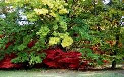 Színesedő fák a Szarvasi Arborétumban