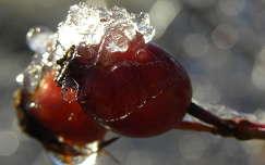 gyümölcs jég csipkebogyó