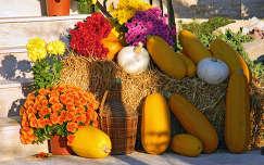 termény ősz tök krizantém