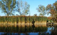 Csávolyi tó