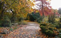 Margitsziget ősszel, Fotó: Novák Titanilla