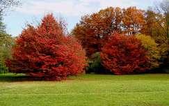 Szarvasi Arborétum 2012. ősz