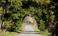 út boltív ősz
