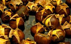ősz gyümölcs gesztenye termény