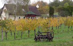 szőlőültetvény ház ősz