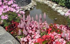 pillangóvirág nyári virág kertek és parkok