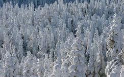 Téli erdő, Skandinávia