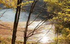 Hámori-tó