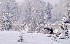 Téli arborétum, Erdőtelek