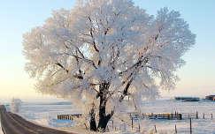 zúzmara tél út fa