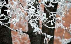 téli pillanatkép