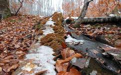 Bükk-erdő, Kolozsvar