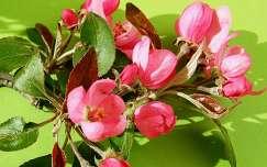 Tavasz szinei