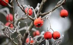 téli csendélet