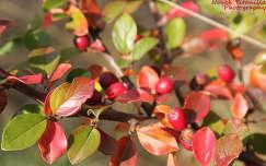 Őszi színek Fotó: Novák Titanilla
