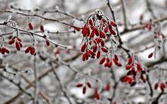 színfolt a télben