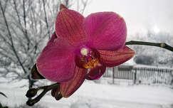Orchidea-Nagybörzsöny