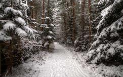 Téli erdei út