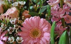 Rózsaszín csokor, jácint