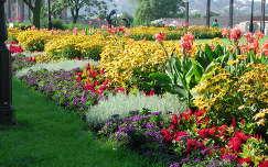 Virágok a Buadai várban