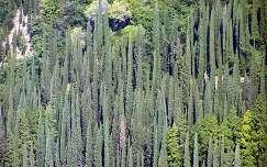 Garda tó-fák a hegyen