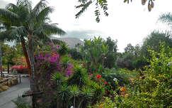 spanyolország tenerife kertek és parkok pálma kanári-szigetek