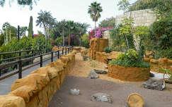 út spanyolország tenerife kertek és parkok pálma kerítés kanári-szigetek