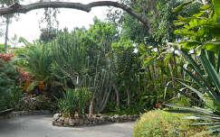 spanyolország tenerife kanári-szigetek kertek és parkok