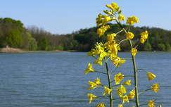 A döröskei tó