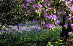 tavaszi virág jácint virágmező tavasz rododendron