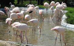 Flaming�k