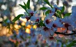tavaszi hajnal