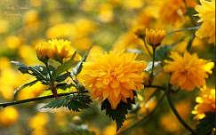 virágzás Fotó: Novák Titanilla