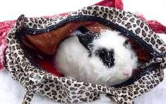 Paca, nyuszim első havazása