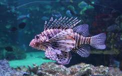 hal, akvárium