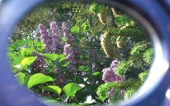tavaszi virág tavasz orgona toboz