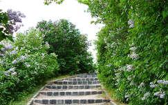 Lépcső orgonákkal a Pannonhalmi Főapátságnál