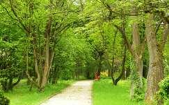 Kámoni Arborétum