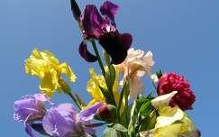 Nőszirom virágcsokor
