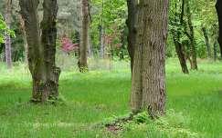 Kámoni Arborétum Szombathely