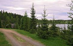 Finnország, erdő, faház, út, finn táj
