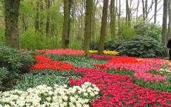 Keukenhof 2009 tulipánok