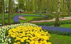 Keukenhof 2009, sárga tulipánok