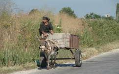 albánia háziállat szamár emberek
