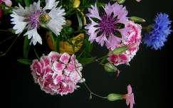 Nyári virágcsokor - fekete háttérrel