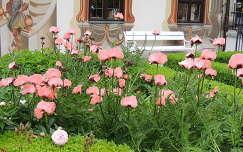 Rózsaszín pipacsok Oberammergauban