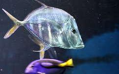 akvárium hal