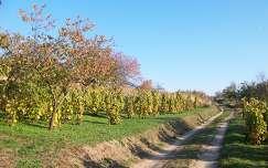 Ősz a szőlődülőn